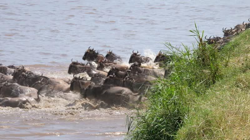Великая миграция: пересечение реки Мара