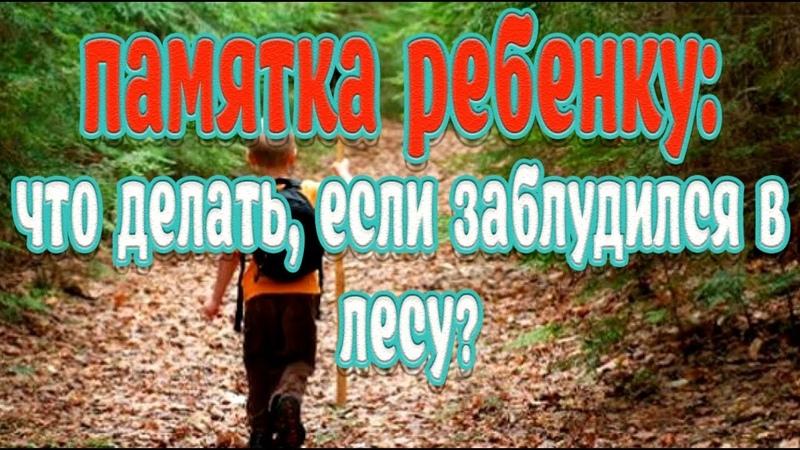 Памятка ребенку➤Что делать, если заблудился в лесу➤Как не заблудиться в лесу