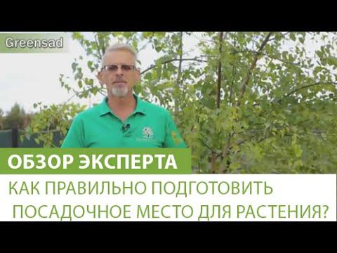 Как правильно подготовить посадочное место для растения