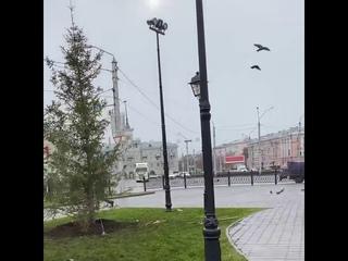 На Октября высадили елочки (Barnaul 22)