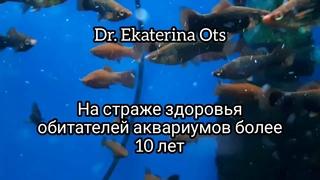 Болезни аквариумных рыбок: золотые рыбки, карпы кои, флауэр хорны, скалярии, дискусы, гуппи, барбусы
