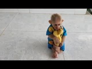 Little monkey little ducky