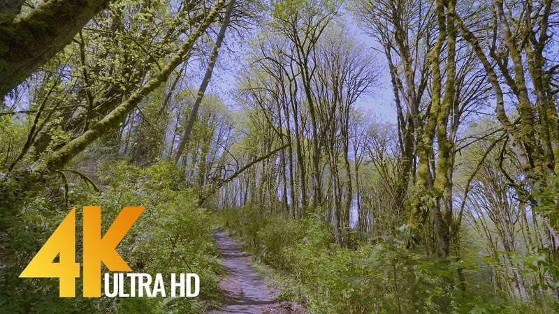 4K Virtual Walk in the Forest along the Creek Upper Coal Creek Trail West Trailhead