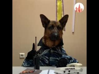 В Сургуте сняли сериал со служебными псами