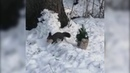 Ручная белка завелась в городском парке Южно-Сахалинска