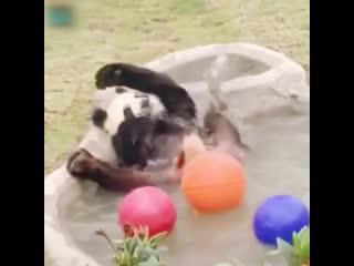 Один день из жизни панды