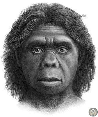 Учёные о загадке «хоббитов» с острова Флорес Древние люди, обитавшие на островах Индонезии и Филиппин и прозванные за невысокий рост «хоббитами», пережили очень быструю эволюцию, чтобы