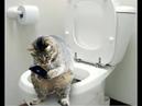 Обалденно смешные кошки Подборка приколов с котами и кошками