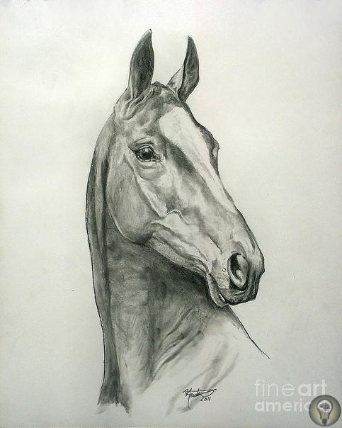 Художница Jeanne Newton Schoborg Влюбленность в лошадей дана с рожденья.