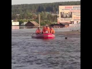 Спасение животных активистами от последствий паводка в Иркутской области