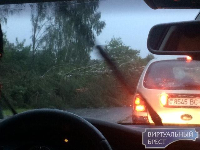 Трассу на Домачево перекрыли упавшие деревья