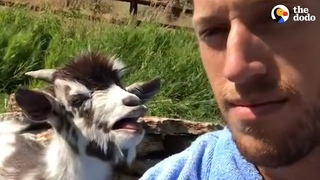 Goat And His Dad Have A Very Important Conversation | The Dodo