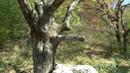 Какое развратное дерево Многие туда садились Кто то поглумился отпилив ветку правильно
