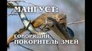 МАНГУСТ Рикки-Тикки-Тави и бесстрашный УБИЙЦА змей, который умеет говорить