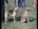 Ко Дню города в Ельце прошла выставка родословных охотничьих собак