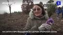 На Сапун-горе высадили 303 дерева крымской сосны