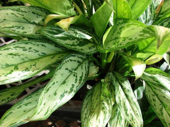 Лучшие растения для темных помещений: какой уход им нужен