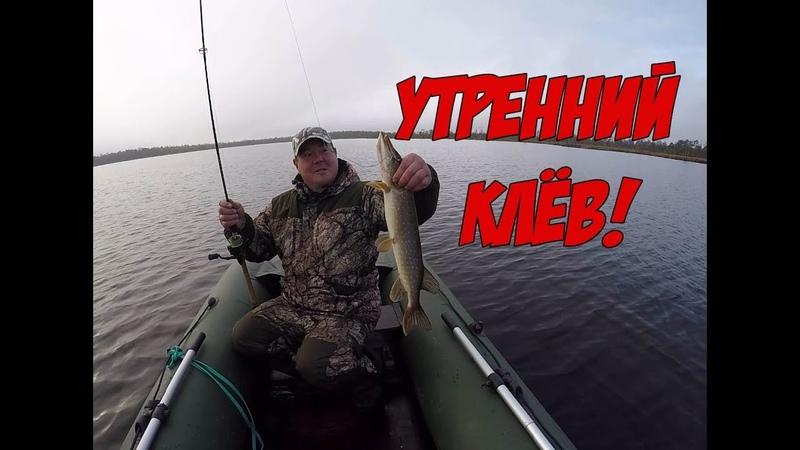 Окунь и Щука атакуют Рыбалка рано утром октябрь 2019