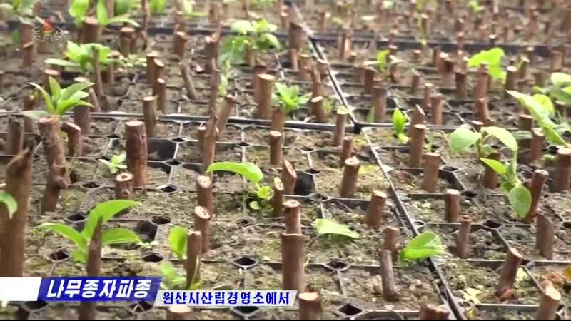 Новости КНДР за 29 марта 2020 года