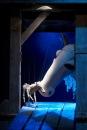 Фотоальбом Большоя Театр кукола