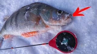 НЕ КЛЕВАЛО! И ВДРУГ Я ПОСТАВИЛ ЭТУ МОРМЫШКУ! Рыбалка в глухозимье .