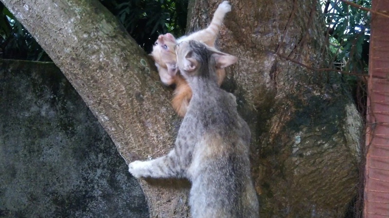 After Several Time Trying Mama Cat Rescue Her Baby Kitten Successfully on the Tree