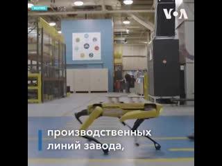 Знаменитый танцующий четвероногий робот от компании BostonDynamics, наконец, устроился на работу. Компания Ford арендовала двух