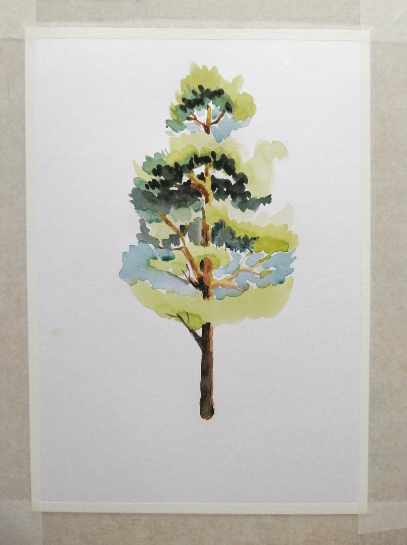 ОНЛАЙН-УРОК по рисованию «Сосна», изображение №7