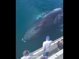 Горбатый кит позирует на камеру, создавая радугу.