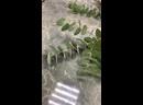 Букет с гвоздиками