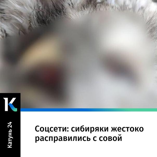 Сибиряки жестоко расправились с совой:https://kat...
