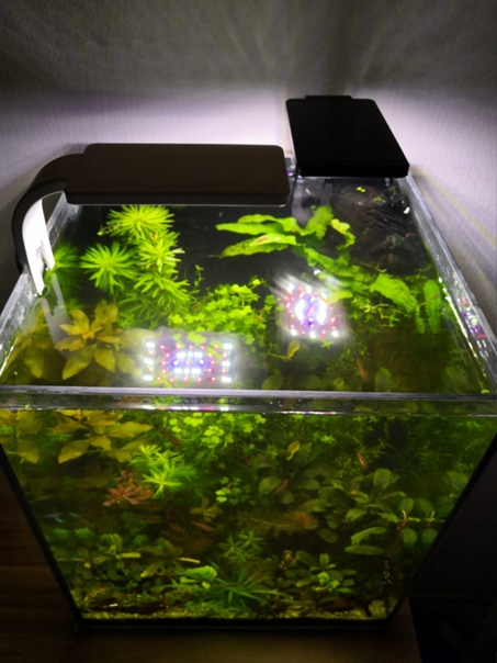 1 Юлия Черкас - Обзор светильника AQUAEL LEDDY SMART 2 PLANT, изображение №8