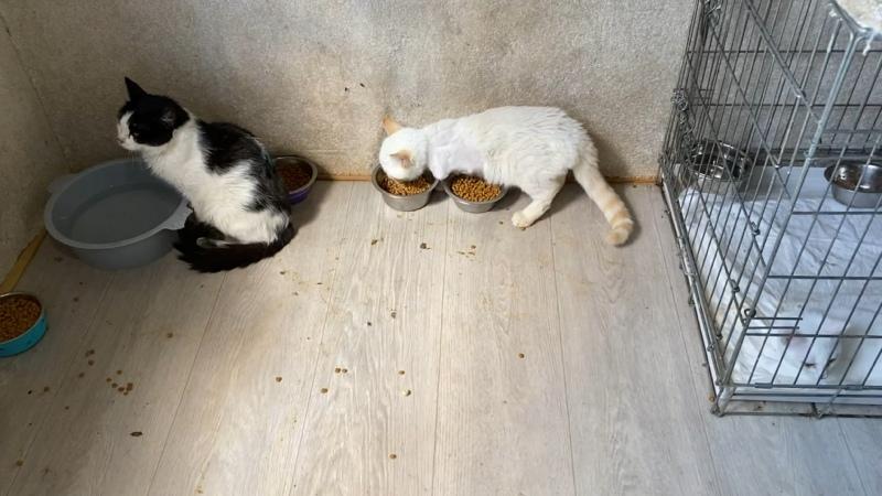 Видео от Клякса 9 Жизней Кошки и собаки в добрые руки