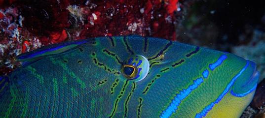 Жители подводного мира. Часть 5