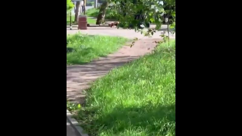 На черновицкой 5 машин копов все в чёрных масках и парня скрутили лицом в асфальт rzn life рзнлайф rznlife рзнлайф ряз