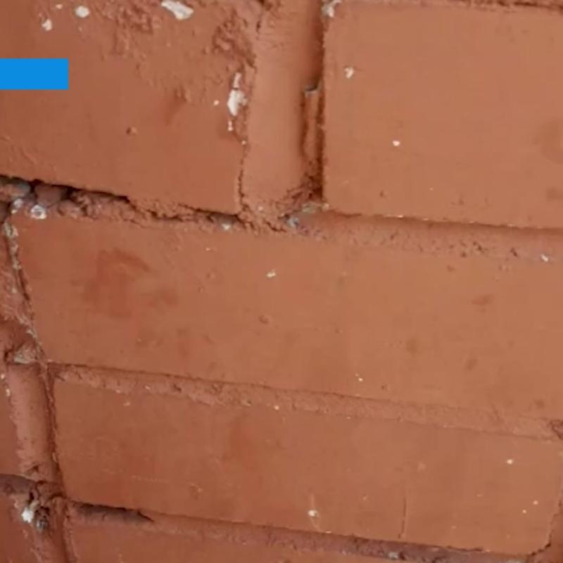 В Северодвинске на балкон прилетела летучая мышь | 29.RU