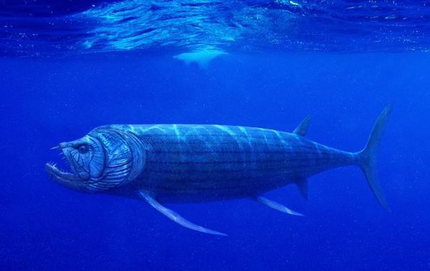 xiphactinus fish - HD2000×1261