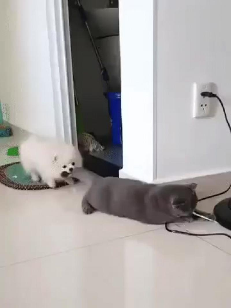 Пофигизм этого кота поражает 😺