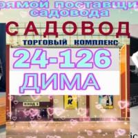 Дима Холов