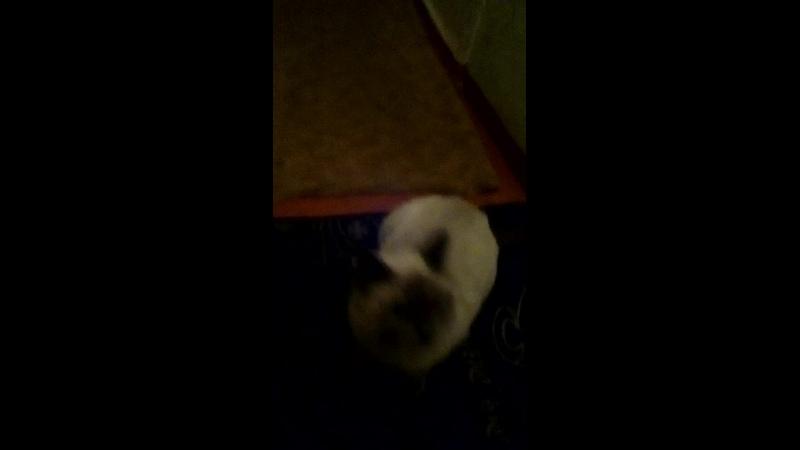 попеда за котом