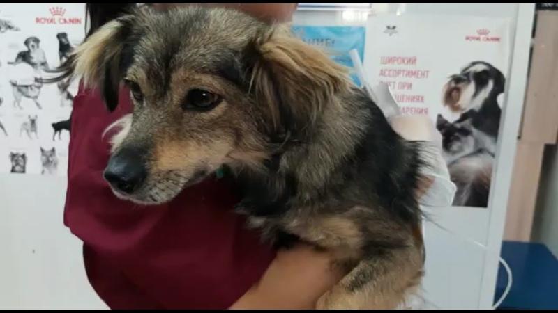 Видео от Ковчег волонтёрская группа помощи животным