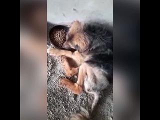 Video by Ковчег (волонтёрская группа помощи животным)