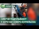 Сивучи в Северо-Курильске приплывают в порт и идут на контакт с людьми. ФАН-ТВ