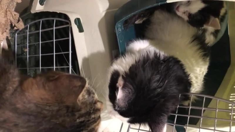 Слепыши обнюхивают новый дом