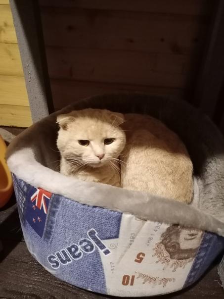 В деревне Ельцы всё лето бродит бездомный котик. П...