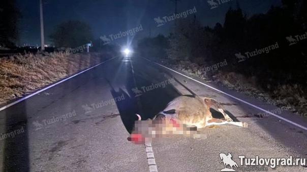 На трассе под Новочеркасском автомобиль сбил коров...