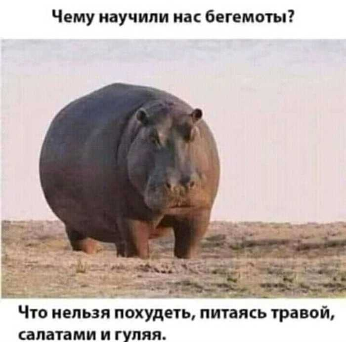 Факт от бегемотов