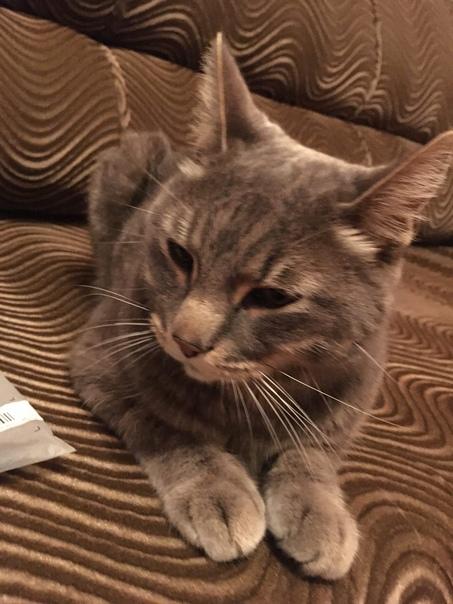 Потерялся кот, если кто-то видел или забрал, верни...