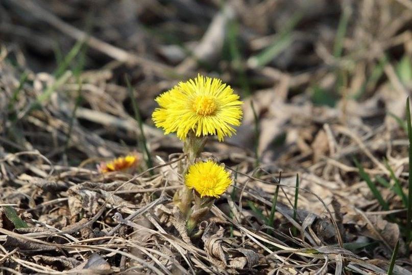 Пора искать первые весенние цветы