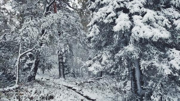 В горах уже снег... Хребет Москаль (Ведьмина гора)...